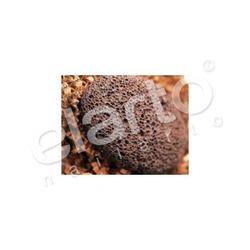 Pumeks ze skamieniałej lawy wulkanicznej
