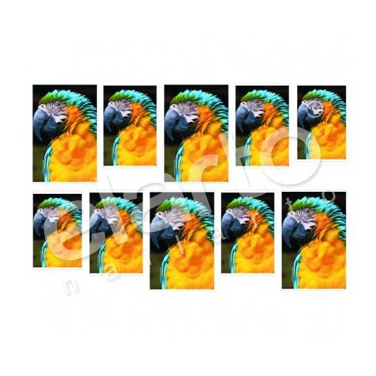 Naklejka na paznokcie - kolorowa papuga