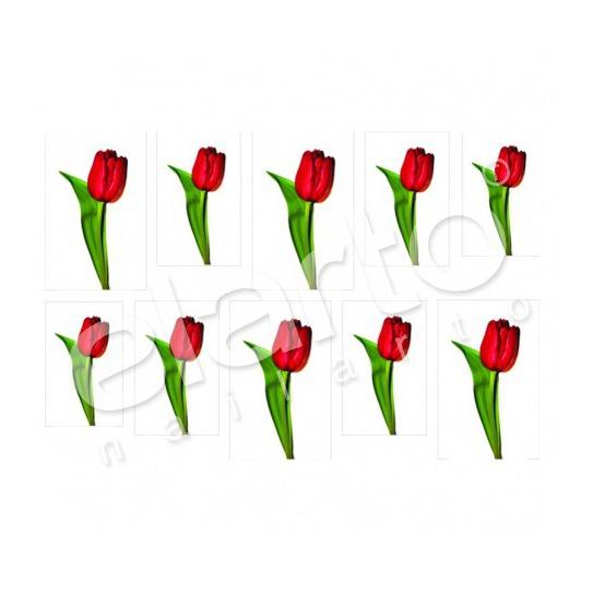 Naklejka na paznokcie - czerwony tulipan