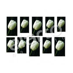 Naklejka na paznokcie - biały tulipan