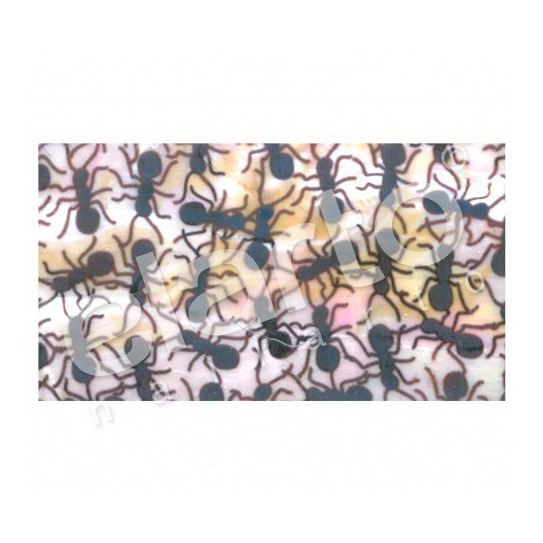 Taśma perlmutowa / muszlowa mrówki